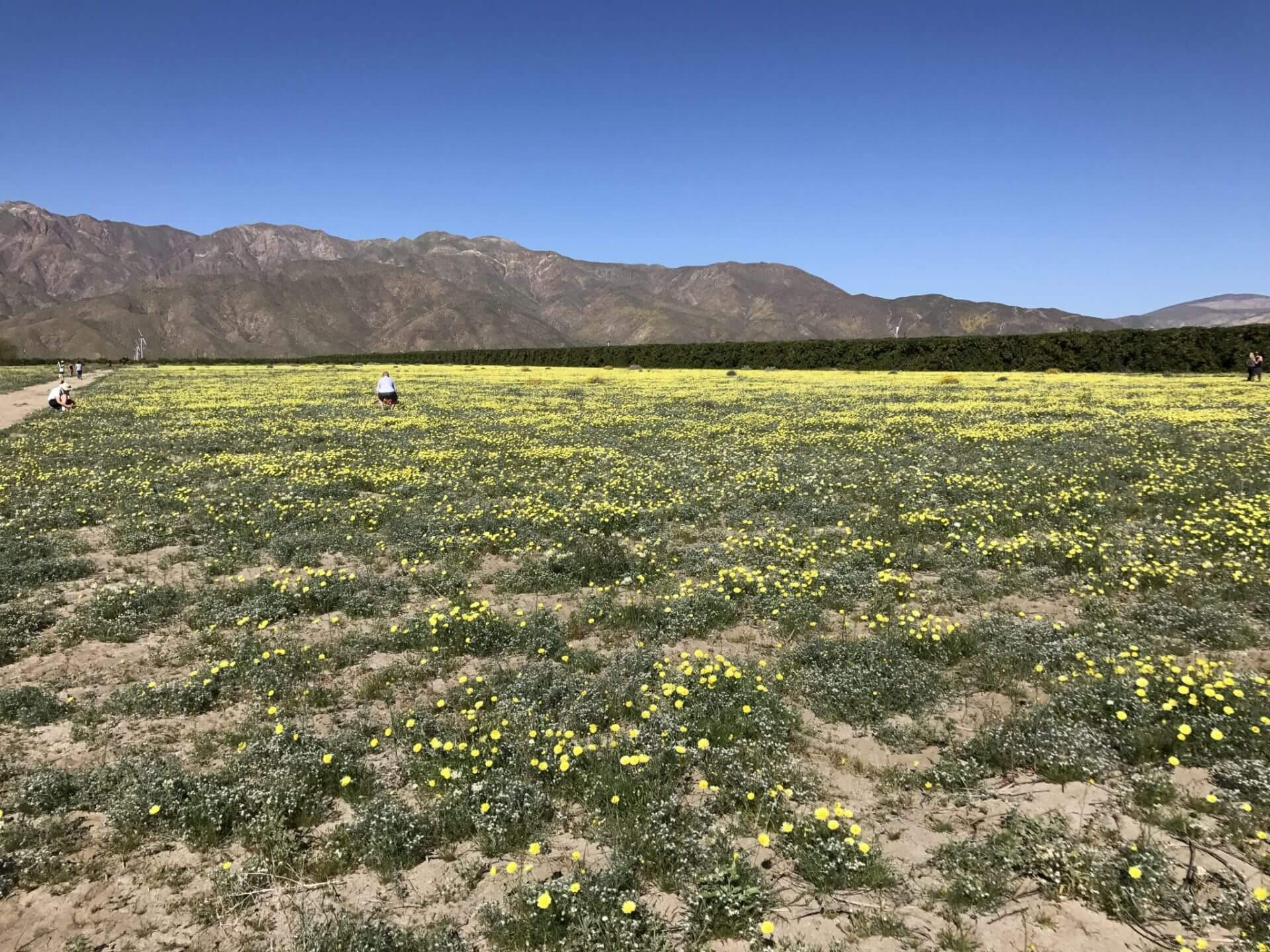 anza borrego state park wildflower road trip march 2017 all day
