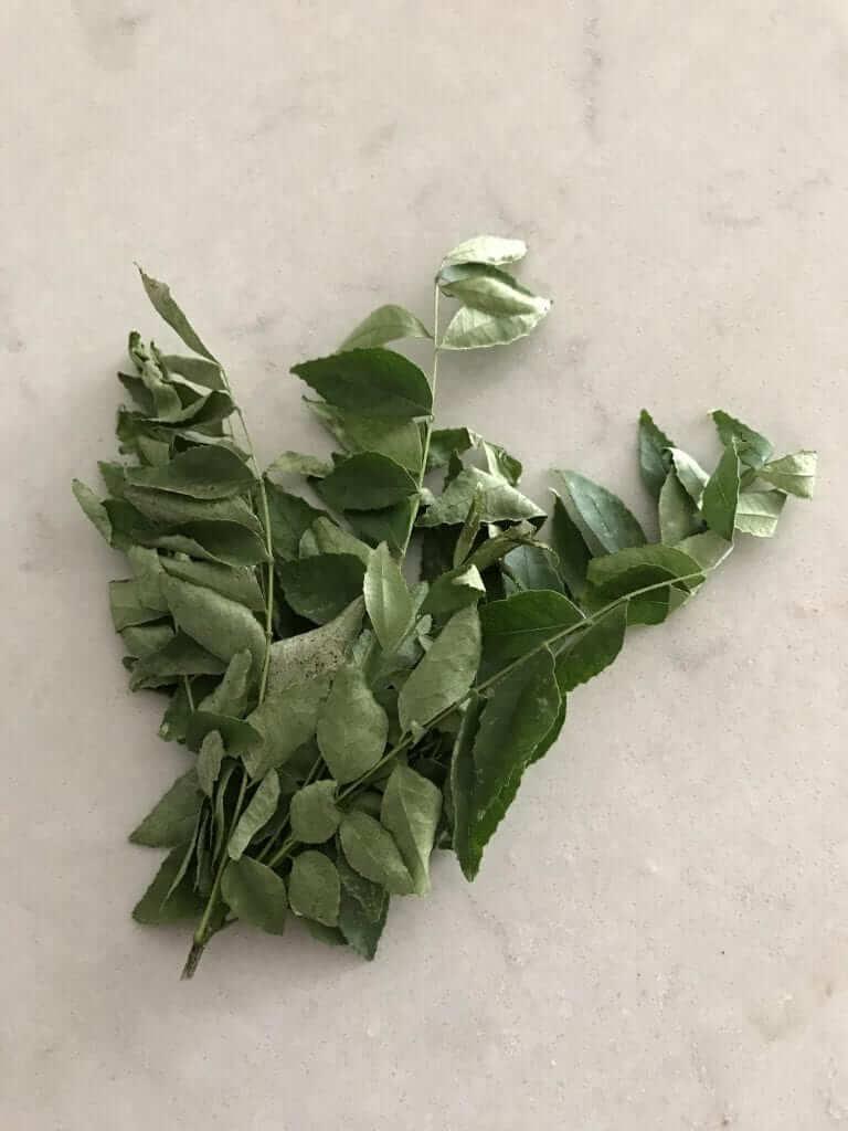 curry leaf tree plant | www.alldayieat.com