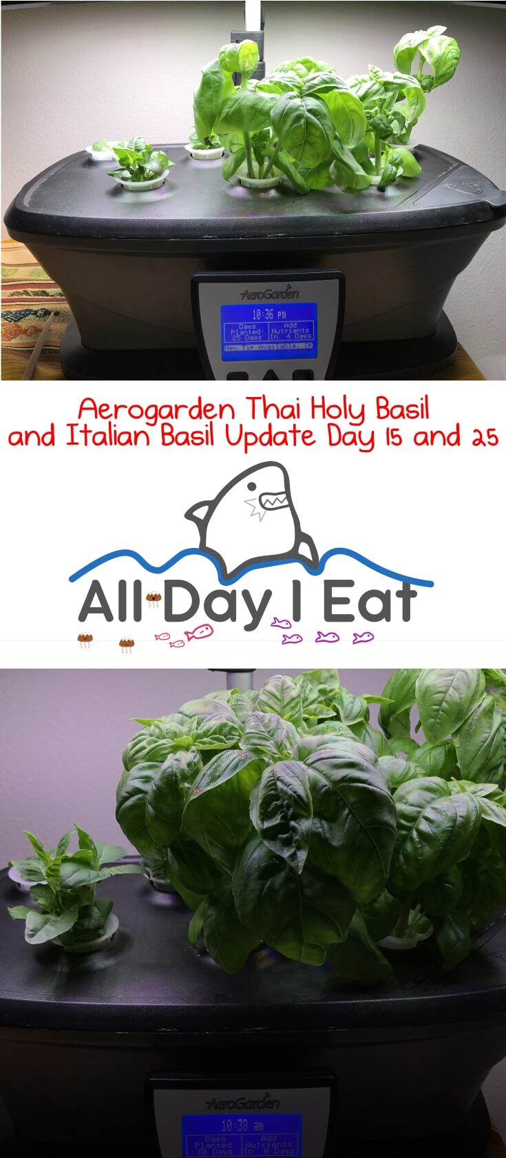 Aerogarden Thai Holy Basil and Italian Basil Update Day 15 and 25. Growing your own herbs indoors, hydroponically, and organically couldn't be any easier! | www.alldayieat.com