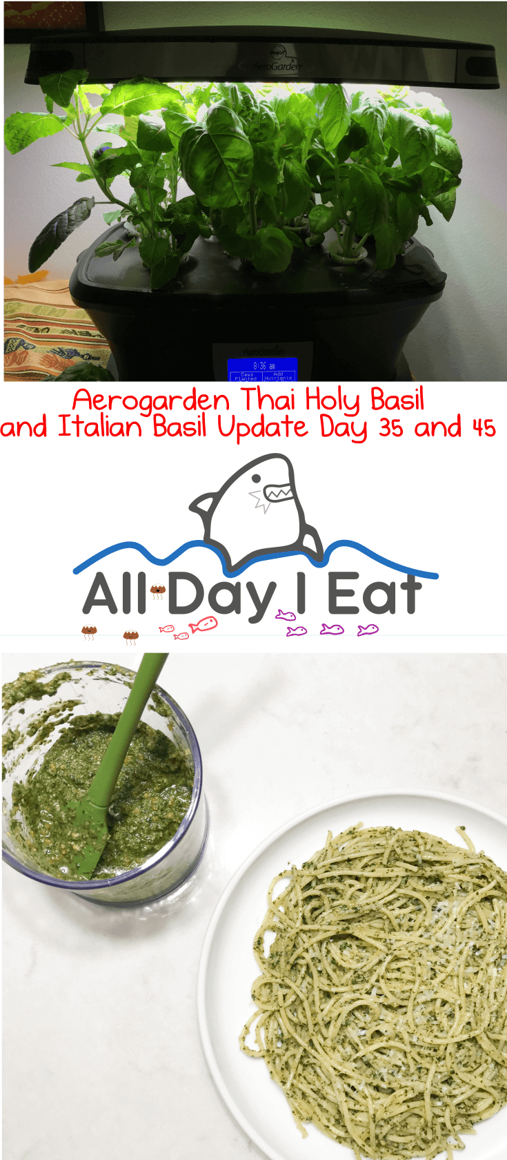 Aerogarden Thai Holy Basil (tulsi) and Italian Basil Update Day 35 and 45. I finally got to take my first harvest of Italian basil and made pesto with it. Can't wait to make Thai Basil Chicken with this thing!!| www.alldayieat.com
