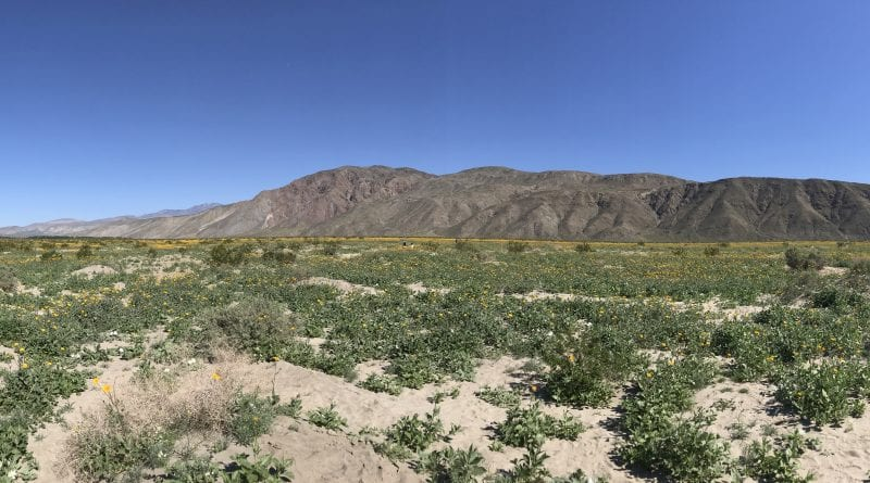 Anza Borrego State Park Wildflower Road Trip March 2017