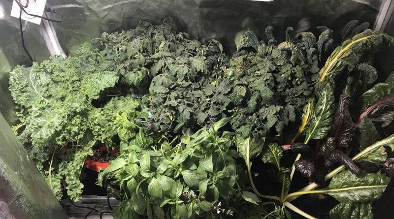diy hydroponic grow dwc chard kale basil tomatoes