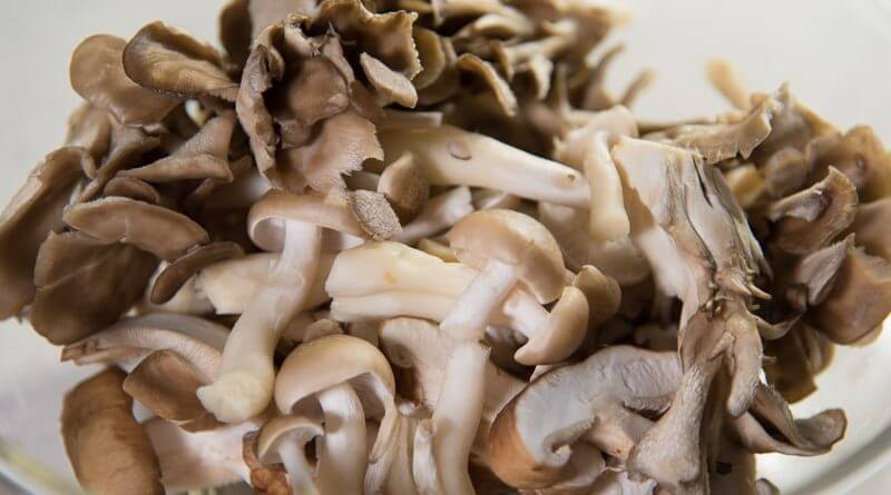 kinoko pasta mushrooms closeup