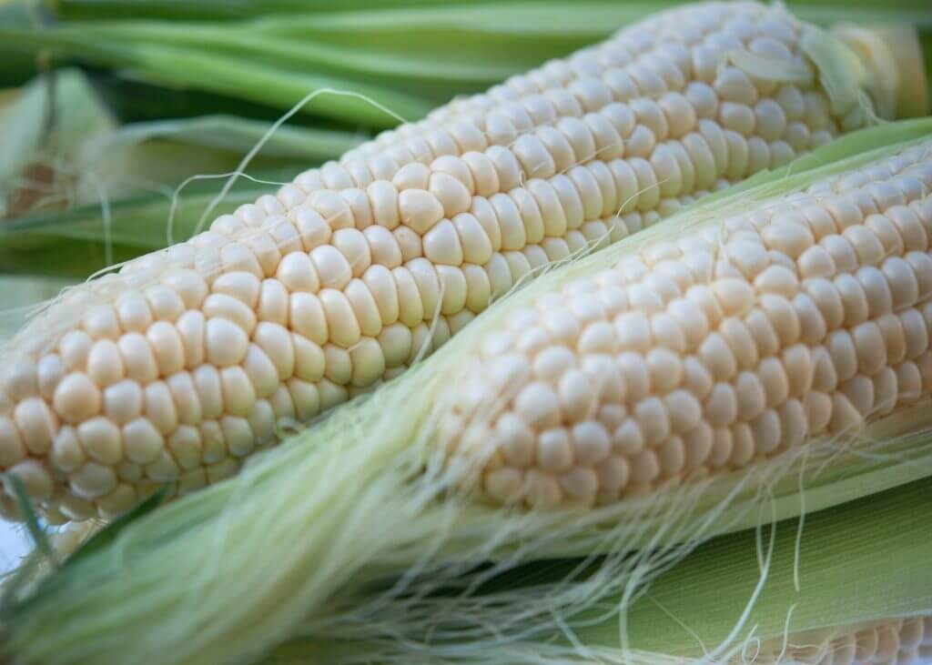 eat-sapporo-japan-summer-hokkaido-pure-white-corn