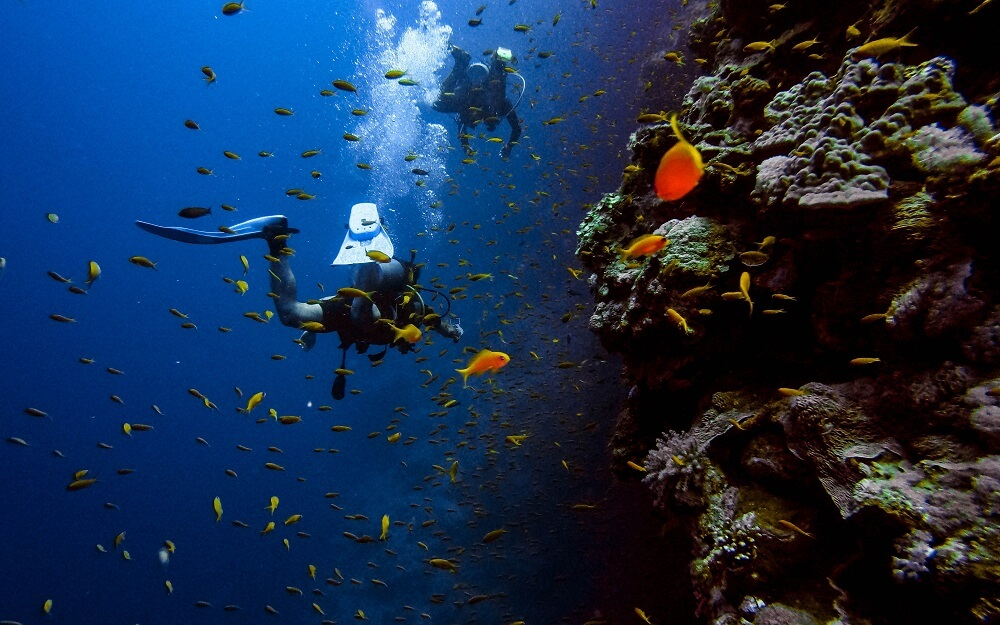 kochi Japan travel 5 things to do in kochi prefecture diving